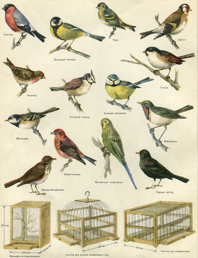 Виды птиц фото и названия россии